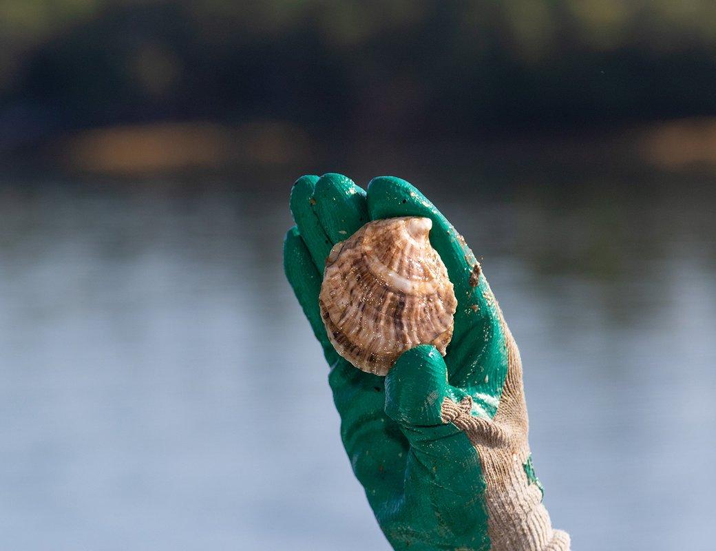 aq-start-guide-species-snow-island-mussels-0779.jpg